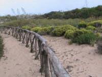 sentiero che conduce alla foce del fiume irminio  - Donnalucata (2868 clic)