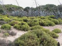 riserva naturale,macchia forestale fiume irminio  - Donnalucata (2927 clic)