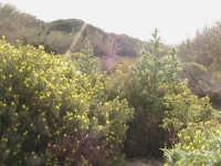 riserva naturale,macchia forestale fiume irminio  - Donnalucata (2572 clic)