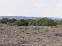 riserva naturale,macchia forestale fiume irminio  - Donnalucata (2749 clic)