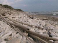 riserva naturale,zona costiera caratterizzata dai ciottoli sparsi sulla riva  - Donnalucata (2558 clic)