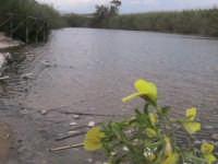 riserva naturale,fiume irminio  - Donnalucata (1927 clic)
