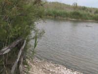 riserva naturale,fiume irminio caratterizzato dai ciottoli che ne  costituiscono  il terreno   - Donnalucata (2653 clic)