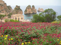 Tonnara in fiore  - Scopello (4332 clic)