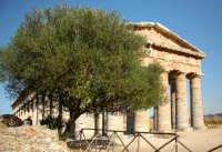 Tempio di Segesta.  - Segesta (2120 clic)