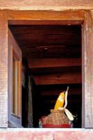 Finestra con pannocchia.  - San marco d'alunzio (3305 clic)