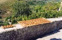 Mostarda di Ficodindia stesa ad asciugare  - Militello in val di catania (4786 clic)