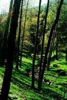Parco delle Madonie  - Madonie (5576 clic)