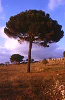 Monti Erei  - Erei (4068 clic)