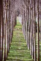 Forestale, caratteristca della zona Enna che si estente nella vicinanze di Piazza Armerina dove trova la sua maggiore manifestazione con il Parco Ronza, zona predilletta dagli Scout  - Piazza armerina (4228 clic)