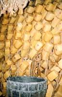 Caciocavallo ragusano  - Ragusa (7135 clic)