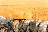 Caciocavallo ragusano  - Ragusa (5380 clic)