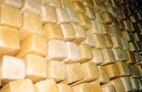 Caciocavallo ragusano  - Ragusa (5327 clic)