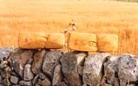 Caciocavallo ragusano  - Ragusa (5255 clic)