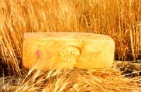 Caciocavallo ragusano  - Ragusa (5487 clic)