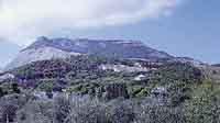 Ville e giardini a Valderice - Sullo sfondo Monte Erice  - Valderice (2893 clic)