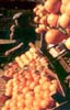 Le arance tarocco del ragusano  - Modica (3718 clic)