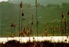 Pergusa - (EN) - Il lago  - Pergusa (5371 clic)
