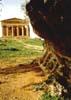 Tempio della Concordia - Agrigento  - Valle dei templi (2599 clic)
