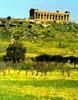 Valle dei Templi - Tempio della Concordia- Agrigento  - Valle dei templi (6636 clic)