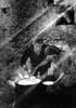 La preparazione della ricotta nelle masserie negli iblei  - Modica (8970 clic)