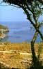 Riserva naturale dello zingaro (TP)  - Trapani (3303 clic)