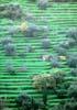 Savoca - (ME) - terrazzamenti agricoli  - Savoca (9829 clic)