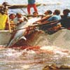 Isole Egadi - la tonnara di Favignana - La Mattanza  - Favignana (20850 clic)