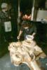 Santa Croce Camerina - (RG) - Preparazione dei pani di S.Giuseppe  - Santa croce camerina (5547 clic)
