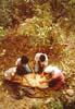 Bronte (CT), Raccolta dei pistacchi - a siliatina  - Bronte (6179 clic)