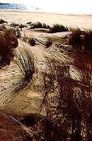 Dune a Sampieri  - Sampieri (4208 clic)