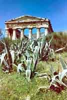 Tempio di Segesta - 1956  - Segesta (1694 clic)
