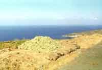 Pantelleria - vendemmia - 1970  - Pantelleria (2237 clic)