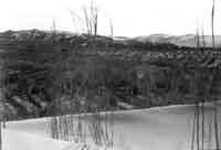 Dune - Donnalucata/Sampieri - 1958  - Donnalucata (2206 clic)
