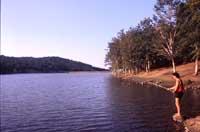 Monti Nebrodi-lago di maullazzo  - Nebrodi (4828 clic)