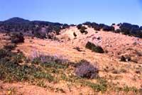 Monti Nebrodi  - Nebrodi (3304 clic)