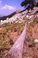 Monti Nebrodi  - Nebrodi (3258 clic)