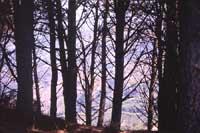Monti Nebrodi  - Nebrodi (3333 clic)