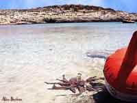 Isola di Lampedusa - Cala Francese  - Lampedusa (7640 clic)