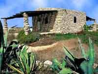Isola di Lampedusa - Rustico con  agavi  - Lampedusa (4645 clic)