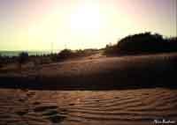 Marispica - Dune  - Ispica (5118 clic)