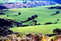 Paesaggio Siciliano  - Irminio (2212 clic)
