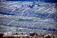 Paesaggio Ibleo  - Ragusa (3583 clic)