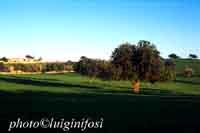 Paesaggio Siciliano SCICLI Luigi Nifosì