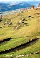 Paesaggio Siciliano  - Giarratana (3490 clic)