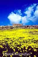 Tempio della Concordia, valle dei templi  - Valle dei templi (5017 clic)