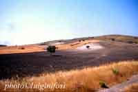 Paesaggio Siciliano  - Licodia eubea (6496 clic)
