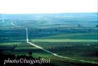 Paesaggio  - Delia (4663 clic)
