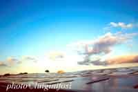 Paesaggio Siciliano con serre  - Donnalucata (5374 clic)
