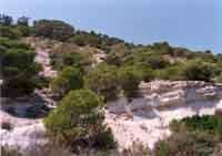 Riserva del Pino d'Aleppo - tipico  ambiente a pino della riserva RAGUSA Nuccia Fontana